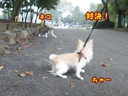 blog8331a.jpg