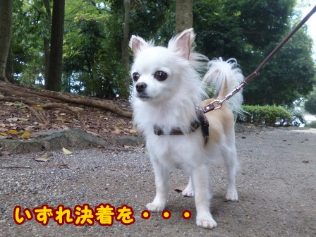 blog8332a.jpg