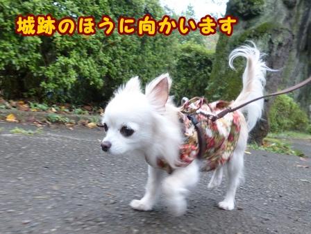 blog8335a.jpg