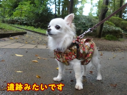blog8338a.jpg