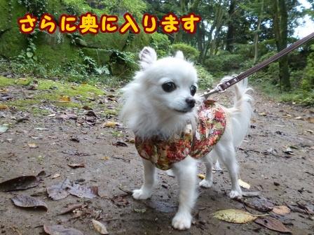 blog8339a.jpg