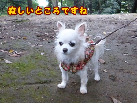 blog8342a.jpg