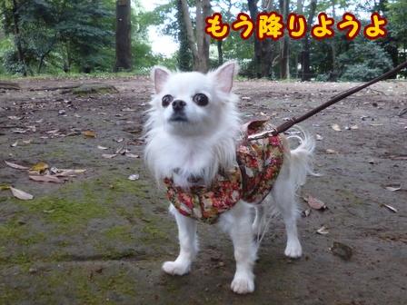 blog8343a.jpg