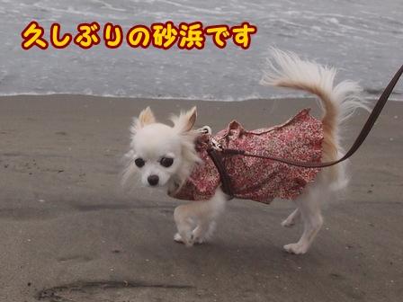 blog8358a.jpg