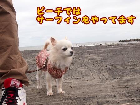 blog8370a.jpg