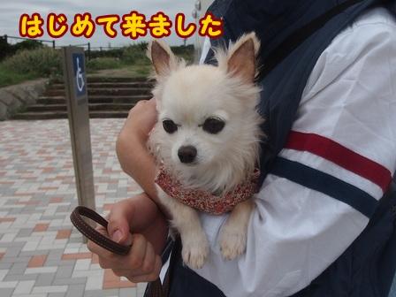 blog8375a.jpg