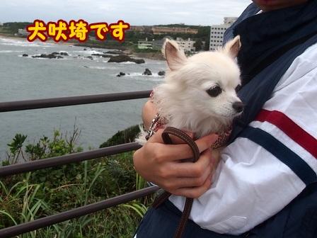 blog8376a.jpg