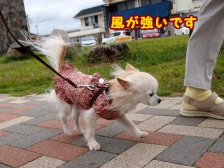 blog8377a.jpg