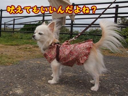 blog8379a.jpg