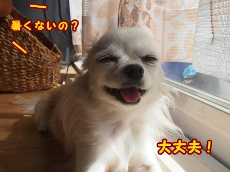 blog8393a.jpg