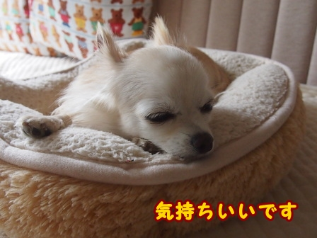 blog8408a.jpg