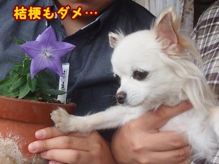 blog8412a.jpg
