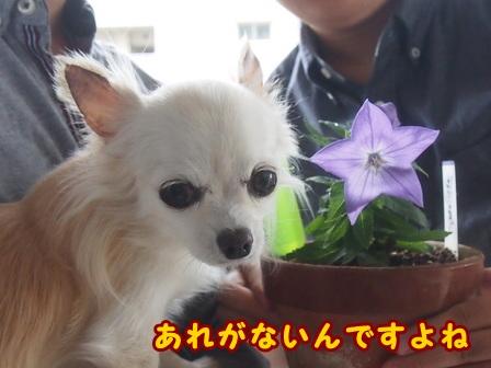 blog8413a.jpg