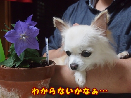 blog8417a.jpg