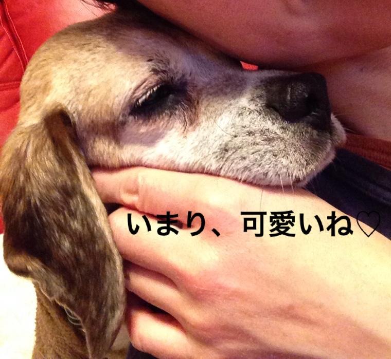 fc2blog_201604302350447f1.jpg