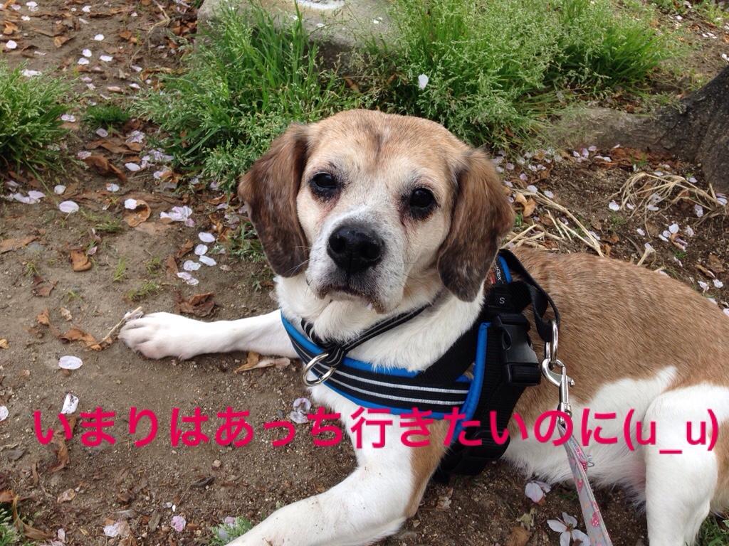 fc2blog_20160503234850d61.jpg