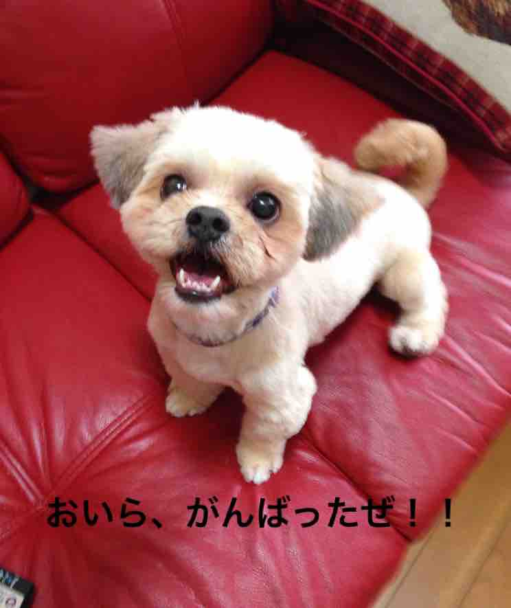 fc2blog_2016062922380001a.jpg