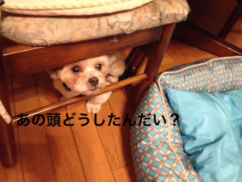 fc2blog_20160713164211d45.jpg