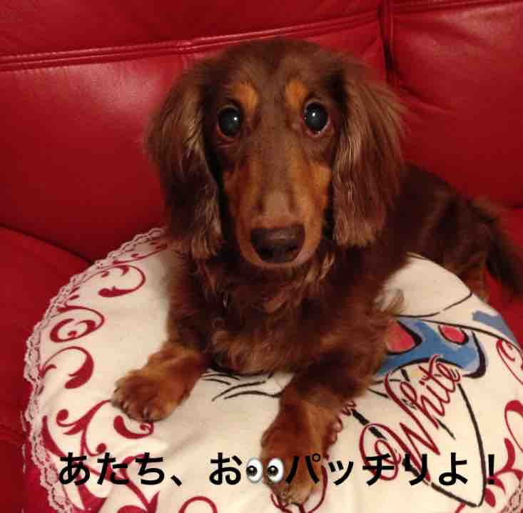 fc2blog_201607152359404ef.jpg