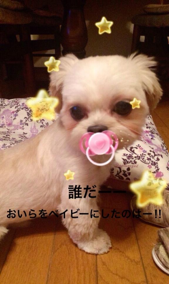 fc2blog_20160824161241cfe.jpg