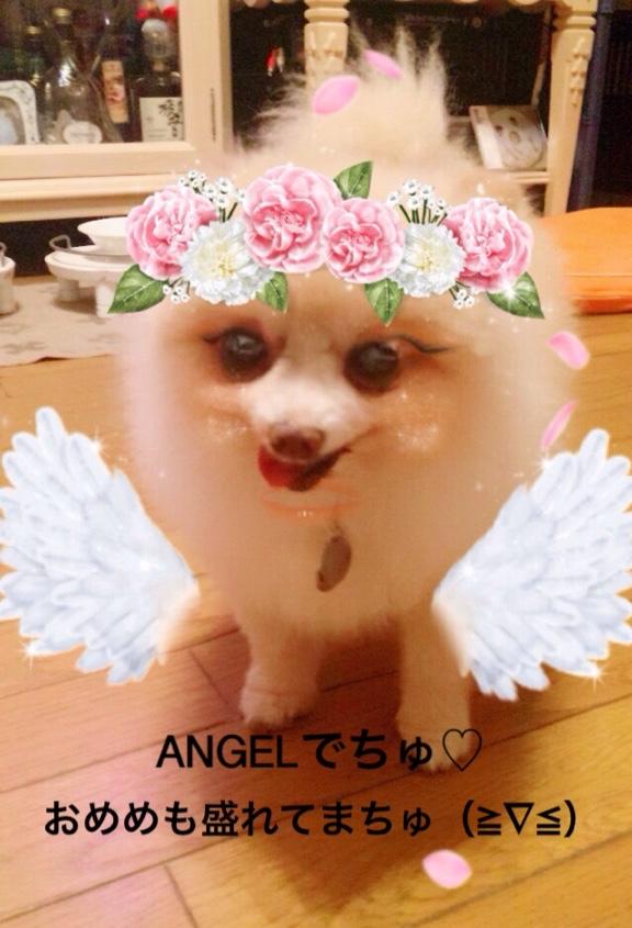 fc2blog_20160824220016426.jpg