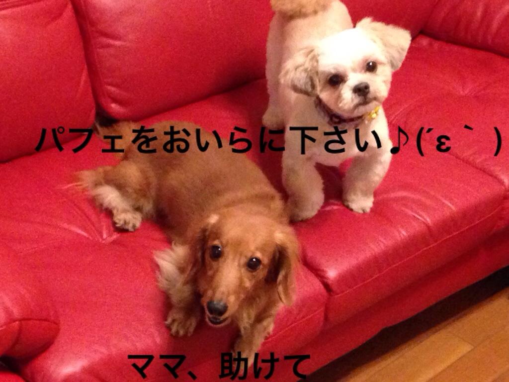 fc2blog_20160919233530fd2.jpg