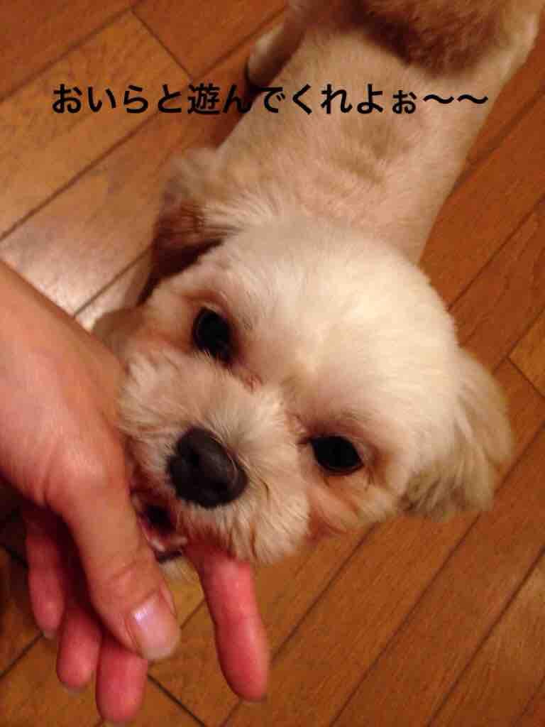 fc2blog_2016100216550125c.jpg
