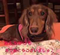 fc2blog_201610052304411e6.jpg