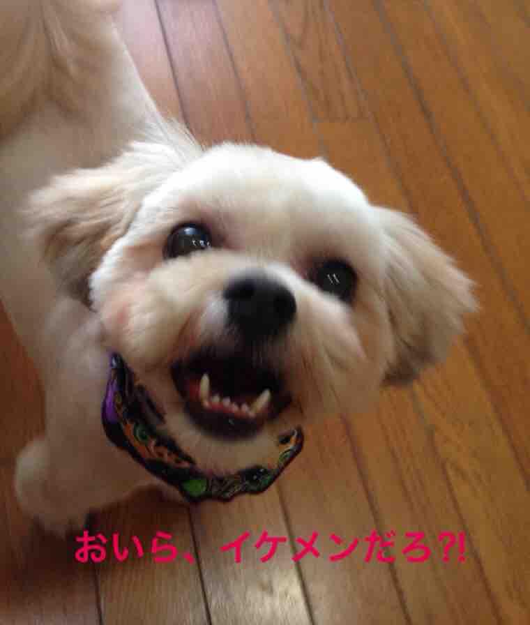 fc2blog_2016101713242156f.jpg