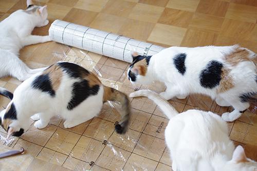 猫とDIY・壁紙貼ろう