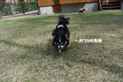 軽井沢38
