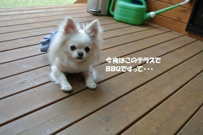 DSC_0349_convert_20160426161010.jpg