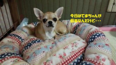 DSC_0533_convert_20160623105104.jpg
