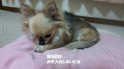 DSC_0595_convert_20160705112429.jpg