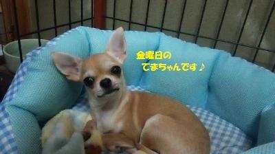 DSC_0609_convert_20160725105513.jpg