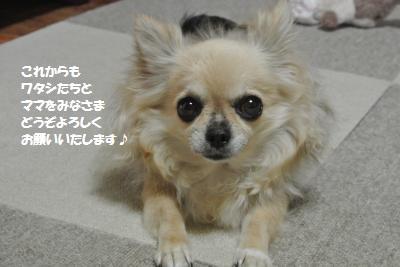 DSC_1515_convert_20160622103848.jpg