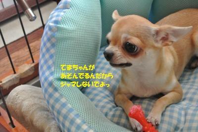 DSC_2730_convert_20160928141722.jpg