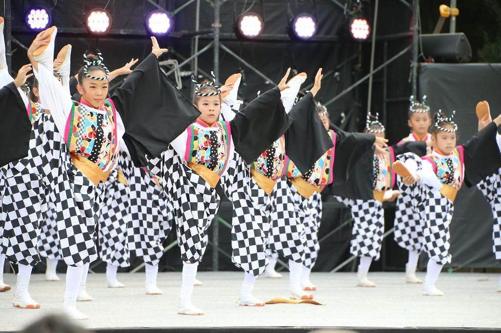 sakura koiyamain 55