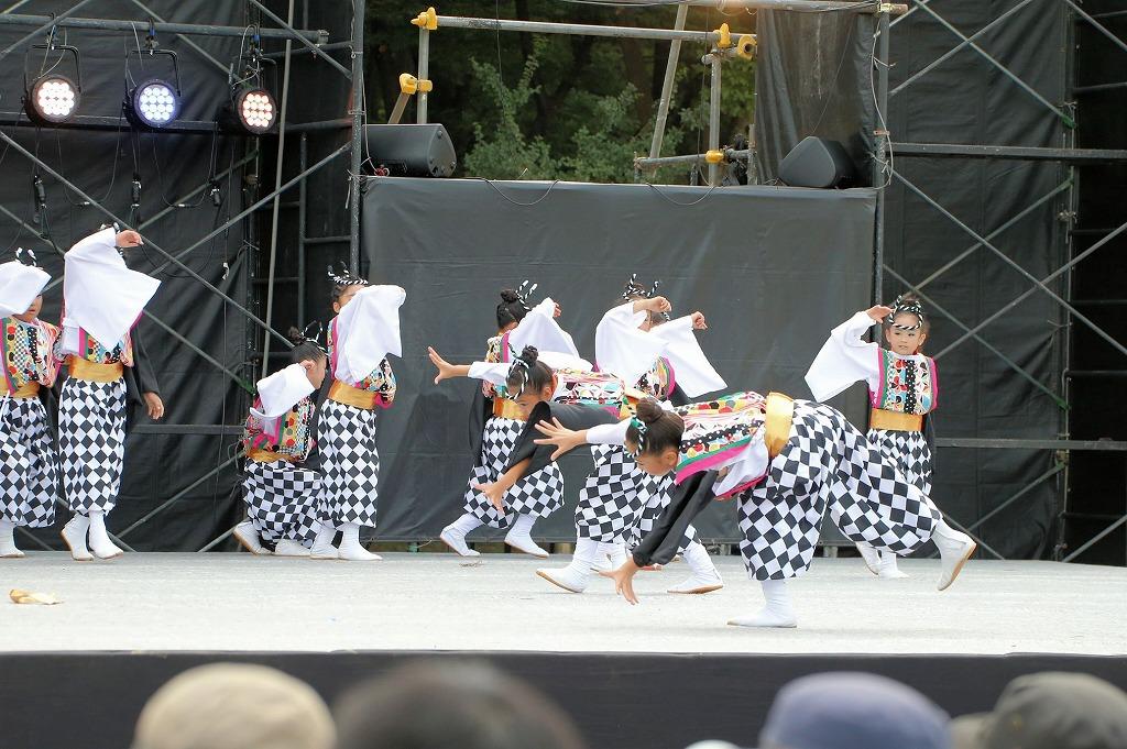 sakura koiyamain 65