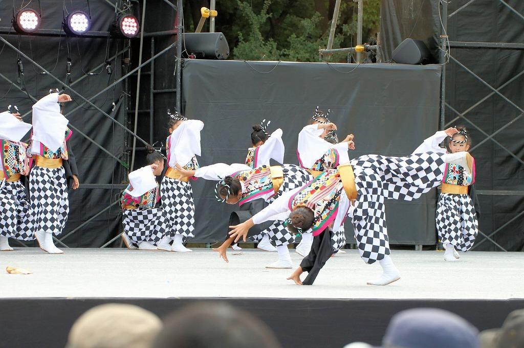 sakura koiyamain 66