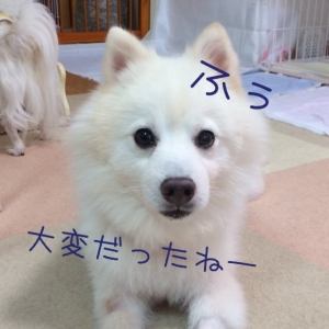 20160723135957a19.jpg