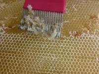 切れない場所は蜜蓋かき器で