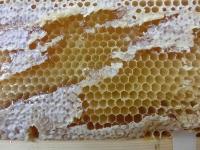 蜜蓋の切れてない部分に残ってます(汗)