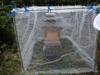 突貫工事で慌てて造った巣箱の保護ゲージ