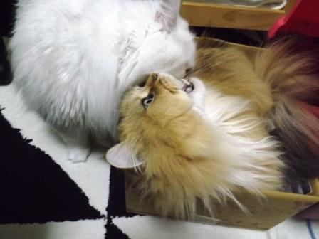 レオンとマリー