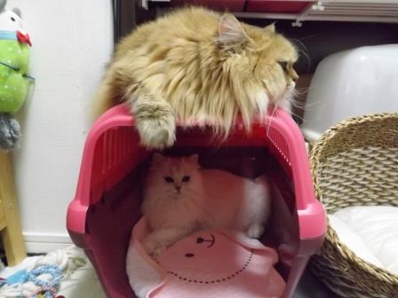 レオンとマリー (2)