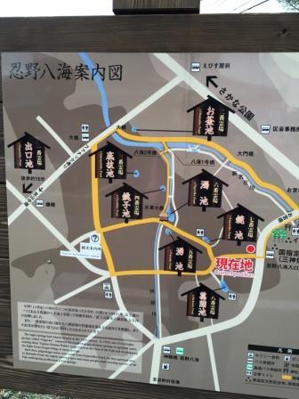 忍野八海 (1)