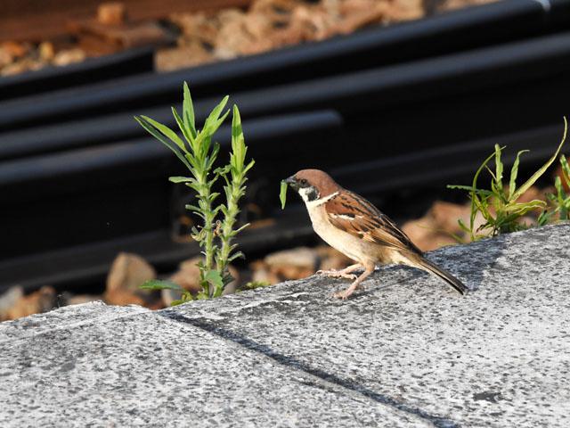 sparrow_hemi_160626.jpg