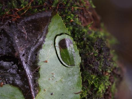 エグリトビケラ幼虫か2