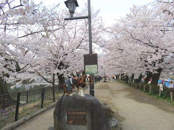 003臥龍公園